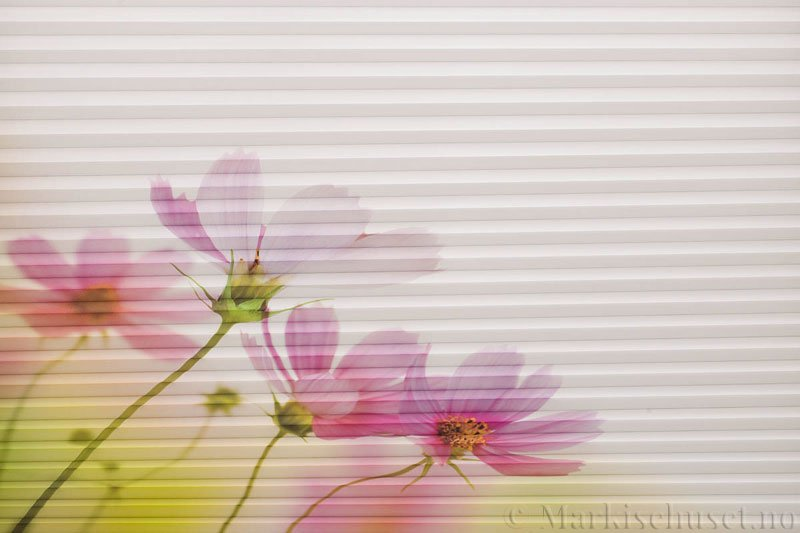 Plisségardin tekstil Chintz Topar Plus DigiDesign 290900-0008 Røde blomster motiv. Bildet er tatt med lys forfra.