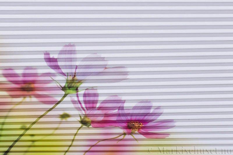 Plisségardin tekstil Chintz Topar Plus DigiDesign 290900-0008 Røde blomster motiv. Bildet er tatt med lys bakfra.